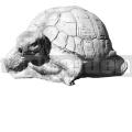 Želva A03