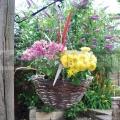 Závěsný proutěný květináč tmavý HB14R