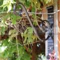 Függő virágtartó Holder bronz