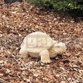 Teknősbéka szobor 269a