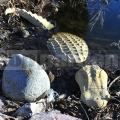 Krokodill szobor 307