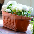 Kvetináč Galeon truhlík 80/33 terakota