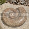 Csiga dombormű 20 - 25 cm