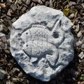 Znamenie Ryby RF09