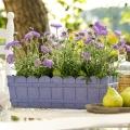 Kvetináče na muškáty
