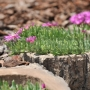 Kvetináč malý - imitácia dreva