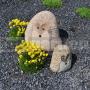 Ježko z kameňa 25 cm