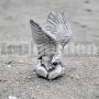 Vták A53