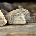 Kamenný ježko ležiaci 20 cm