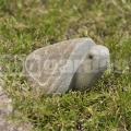 Korytnačka z kameňa 15 cm