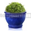 Kvetináč glazovaný TOP011 modrá
