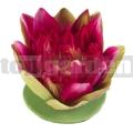 Lekno ružové 17cm Lotus 123571