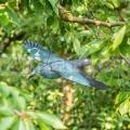 Plašič vtákov - vrana art 4528