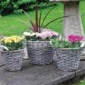Prútené kvetináče - sada 3 ks WICKER6