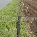 Sieť proti ohryzu 401R - ochrana stromov